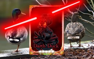 Darth duck